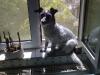 Terrier Mix Weibchen Winni - Katzenbetreuung Wien