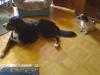Berner Sennenhund Gaston und Terrier Mix Winni - Katzenbetreuung Wien