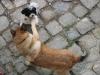 Hundebegrüssung - Katzenbetreuung Wien