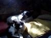 Hauskatze Leila und Hund Winni