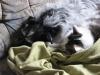 Terrier Mix Weibchen Winni und Hauskater Neo beim Kuscheln