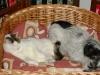 Kater Neo und Terriermix Weibchen Winni