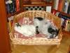 Hund Winni und Katz Neo
