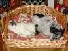 Jack Rassel Terrier Mix Winni und Hauskatze Neo