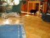 Eskimo Dog Luna, Kätzin Leila, Kätzin Amelia, Kater Neo