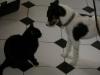 Hauskatze Amelia und Terrier Max beim Kennenlernen