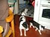Parson Russel Terrier Max, Kätzin Leila, Kater Neo