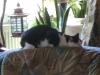 Katzenbetreuung Wien / Katzenkörper - Die Grundform des Körpers ist bei allen Katzen mehr oder weniger die gleiche. Der Kopf besteht aus einem kompakten Schädel und kräftigen Kiefern, die auf Beutefang ausgerichtet sind.