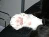 Katzenbetreuung Wien / Katzenpfoten - Die Pfoten der Katze sind perfekt an die Anforderungen der Natur angepasst: Ihre weichen Fußballen ermöglichen ein geräuschloses Anpirschen an die Beute. Außerdem dämpfen sie die Bewegungen der Katze bei Sprüngen oder bei einem Fall.
