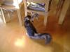 Hauskatze Baby - Halblanghaarkatze beim Spielen - Katzensitter Urlaubsservice Stieglecker