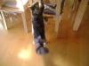 Katze - spielende Katze - Vor Ort Katzen Sitter Stieglecker