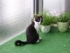 Katzenbetreuung Wien - Katzenbaby / Deshalb nimmt das Thema Erziehung in der Katzenhaltung auch nur eine relativ kleine Rolle ein.