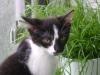 Katzenbetreuung Wien - Katzenbaby / Anders als ein Hund setzt oder legt sich eine Katze eben nicht auf Kommando hin oder bleibt an Ort und Stelle, bloß weil Herrchen oder Frauchen das gerade will.