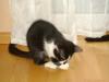 Katzenbetreuung Wien -  Kitten / Neugeborene Kätzchen sind etwa 10-15 cm groß und wiegen meist zwischen 80 und 120 Gramm.