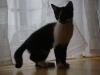 Katzenbetreuung Wien -  Kitten / Anatomisch gesehen entspricht die Katze ihren wilden Vorfahren.