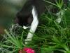 Katzenbetreuung Wien -  Kitten / Höchstleistungen im Laufen, Springen und Klettern entsprechen einer Physiologie, die auf Beutefang ausgerichtet ist.