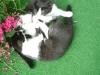 Katzenbetreuung Wien -  Kitten / Katze sein heißt jagen, klettern, springen, Krallen wetzen, Territorium abgrenzen, erbrechen uvm.