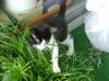 Katzenbetreuung Wien -  Kitten / Und das besonders gern in der Nacht – mit anderen Worten – da Katzen keinen Sinn für materielle Werte besitzen ist Toleranz gefragt!