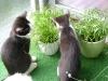 Katzenbetreuung Wien -  Kitten / Eine sich bewegende Hand, ein flatterndes Hosenbein wird zum Beute-Ersatzobjekt. Richtiges, ausgiebiges Spielen dient daher nicht nur zur Festigung der Mensch-Tier-Beziehung, sondern auch zur Reduktion der Triebenergie.