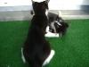 Katzenbetreuung Wien -  Kitten / Das Gesicht, vor allem die Augen, Ohren und Schnurrhaare lassen viel vom Gefühlszustand der Katze erkennen.