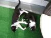 Katzenbetreuung Wien -  Kitten / Katzen schlafen, essen, faulenzen und spielen in einem sogenannten Heimbezirk.