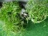 Katzenbetreuung Wien -  Kitten / Neu zugezogene Katzen werden von den Alteingesessenen nicht automatisch akzeptiert, sondern oftmals herausgefordert.