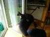 """Katzenbetreuung Wien -  Kitten / Einzelgänger sind selten, denn die meisten Tiere bemühen sich unentwegt um einen Platz in einer """"Katzengesellschaft""""."""