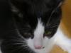 Katzenbetreuung Wien -  Kitten / Rangkämpfe können mit Schrammen und Bisswunden enden.