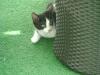 Katzenbetreuung Wien - Katzenbaby / Einige Tage nach der Geburt kann man einen weiteren Reflex beobachten, der als Milchtritt bezeichnet wird.
