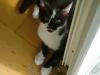 Katzenbetreuung Wien - Katzenbaby / Man spricht bei diesem Verhalten auch vom Treteln, welches auch von erwachsenen Katzen gezeigt wird, die damit großes Wohlbefinden zum Ausdruck bringen.