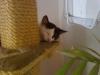 Cat Day Sitterservice - Hauskatzenbetreuung Wien