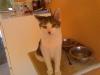 Cat Day Sitter - Katzen Babyservice Wien