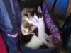 Cat Day Sitter - Katzenfoto