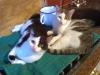 Cat Day Sitter - Katerbetreuung Wien