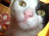 Cat Day Sitter - Landkatzen betreut in Wien