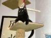 Cat Day Sitter - Katzensitter Wien