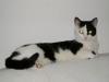 Cat Day Sitter - Vorort Betreuung Wien
