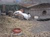 Kleintier Betreuung - Kaninchentummeln in der Kaninchenbehausung