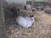 Kleintier Betreuung - Hasentreiben im Außengehege