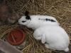 Kleintier Betreuung - Hasen bei der Hasentränke