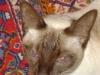 Katzenbetreuung Wien - Katzengerechte Betreuung