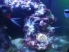 Tierfotogalerie Stieglecker - Meerwasser Garnelen - Je nach Art und Lebensraum ernähren sich Garnelen von Kleintieren, Algen und Partikeln, die auf den Meeresboden sinken.