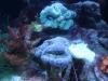 Tierfotogalerie Stieglecker -  Korallen - Innerhalb der Nesseltiere gibt es die Klasse der Blumentiere.
